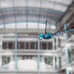 The Festo Robotic Dragonfly