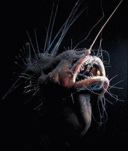 Alien Creatures of the Mariana Trench - RobotSpaceBrain
