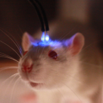 Using Optogenetics to Fight Obesity