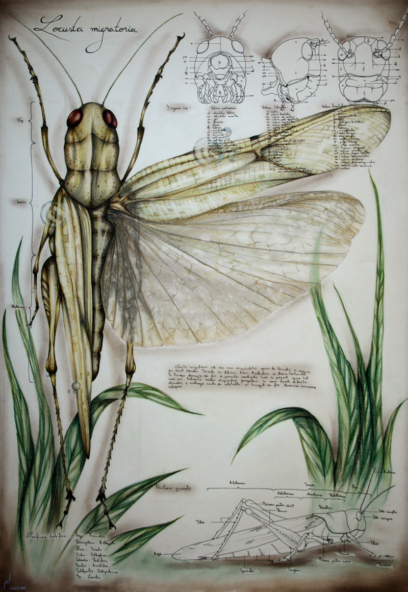 Insects Robotspacebrain Winged Made From Old Computer Circuit Boards And Electronics Entomology Is The Scientific Study Of With Over 13 Million Described Species Field Overwhelmingly Complex Represent 2 3