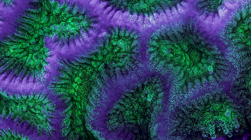 Coral Reef Time-lapse