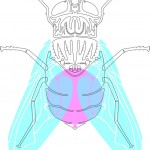 Insect Illustrations by Will Scobie