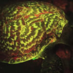 Bioluminescent Hawksbill Sea Turtle